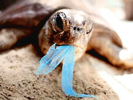 photo of turtle eating plastic